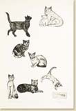 thumbnail link to cats section of print gallery